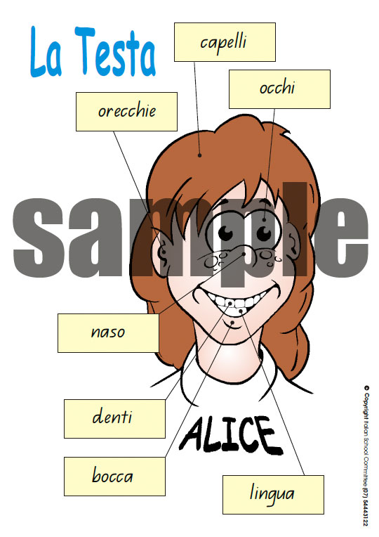 Parts of the head Italian language A4 poster